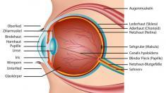Aufbau Auge