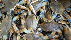 Krabben, Schalentiere