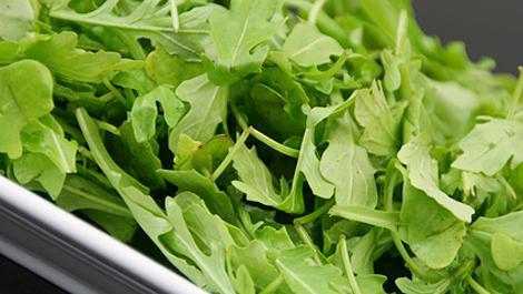 rucola, salat