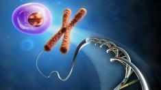Zelle, Chromosom und DNA-Strang