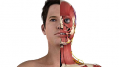 anatomie-augen-800.png