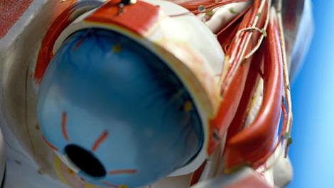 erkrankungen der augenmuskeln: starre blicke - netdoktor.de