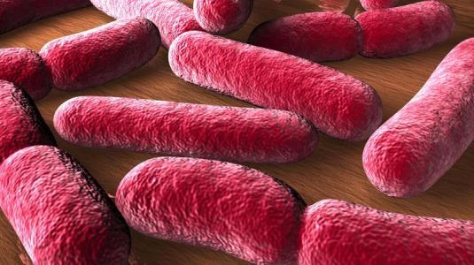 falsche bakterien im darm machen dick