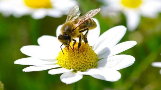 insektengiftallergie