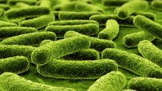 Bakterien,