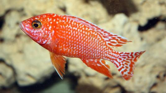 ein aquarium mit buntbarschen wird ins weltall geschossen, um ursachen der reisekrankheit aufzuklären