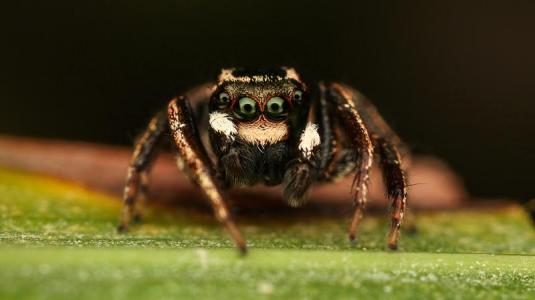 Heilen mit Spinnengift und Schimmelpilz