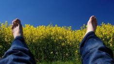 Heuschnupfen, Allergie, Pollenflug