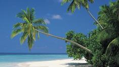 Strand, Palmen, Meer, Urlaub