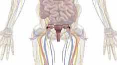 anatomie-geschlechtsorgane-frau-800.png