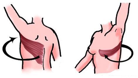 brustaufbau, brustkrebs, rückenmuskeln, körpereigenes gewebe