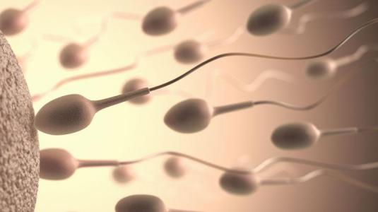 spermien
