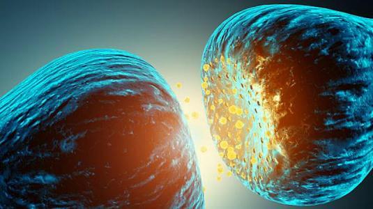 synapse an nervenzellen