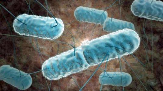 radioaktive durchfallbakterien (listerien) gegen bauchspeicheldrüsenkrebs