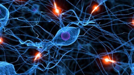 natürlich vorkommenes protein schützt nervenzellen nach einem schlaganfall vor dem zelltod.