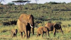 Elefanten, Afrika, Reisen