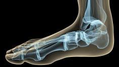 Fuß, Fußanatomie, Fußgelenk, Ferse, Ballen