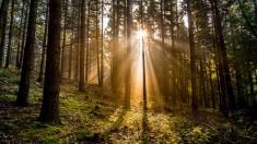 Lichtstrahlen im Wald