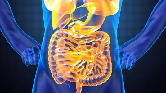 darmschleim verhindert immunantwort