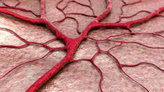 Gehirn, Blutgefäße, Kapillaren