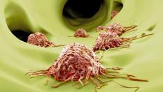 Immunsystem produziert Antibiotikum im Gehirn
