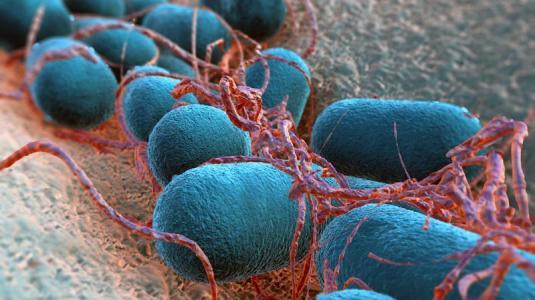 escherichia coli ist an verschiedene habitate sehr gut angepasst