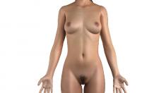 Anatomie, Weibliche Brust, Brüste, Scham, Vulva