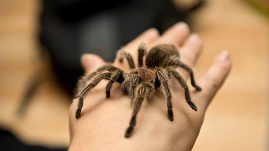 spinnenphobie erfolgreich bek