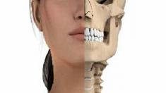 anatomie-mund-zaehne-800.png