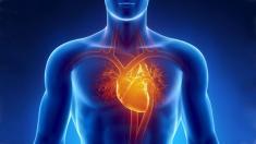 Herz-Anatomie