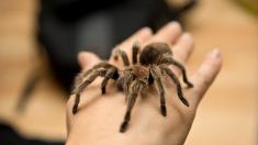 Spinnenphobie erfolgreich bekämpfen