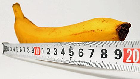 penis, penislänge