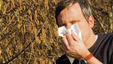 Mann vor Haselnussstrauch niest in ein Taschentuch.
