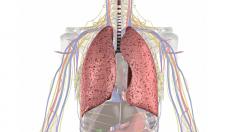 anatomie-lunge-atemwege-800.png