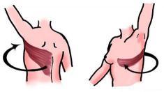 Brustkrebs, Brustaufbau, Rückenmuskeln, körpereigenes Gewebe,