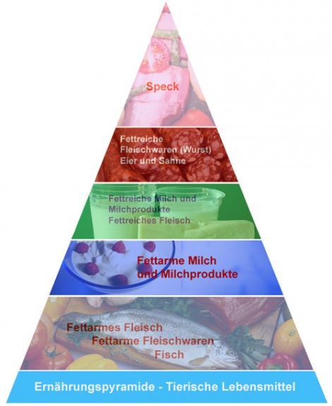 ernährungspyramide tierische lebensmittel