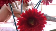 Blumen, Gerbera