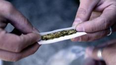 Cannabins, Drogen, Sucht, Marihuana, Haschisch,