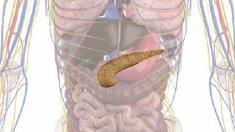 anatomie-bauchspeicheldruese-800.png