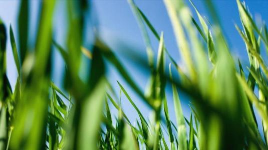 allergie, gräser, heuschnupfen, pollen
