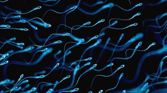 blut im sperma