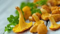 Pilze, Pfifferlinge