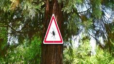 Zecke, Warnschild, Baum