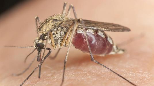 Insektenstiche - was wirklich hilft