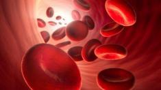 Nanoschwämmschen sammeln Giftstoffe aus dem Blut.