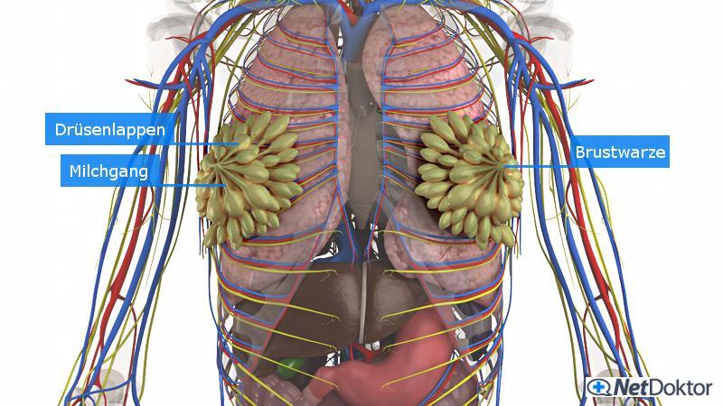 Schmerzen in der rechten Brust und plötzlicher Gewichtsverlust