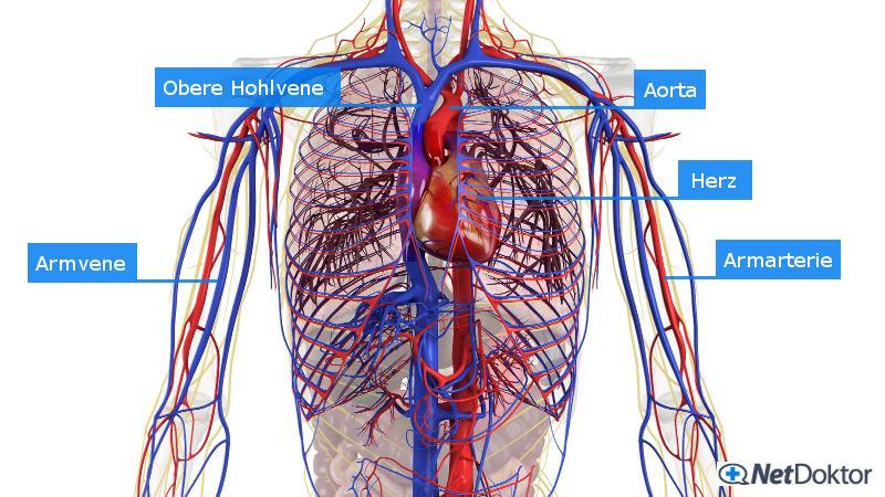 Durchblutungsstörungen: Ursachen, Risiken und Therapie - NetDoktor