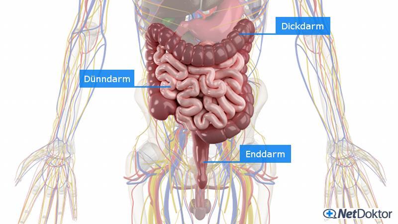 Durchfall: Medikamente, Ursachen, Tipps - NetDoktor