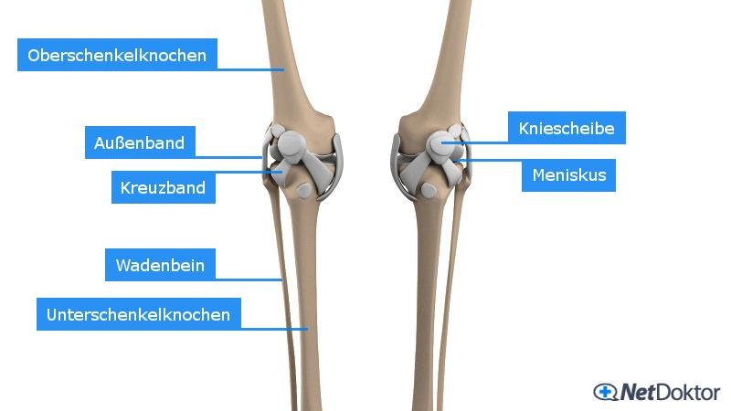 Knieschmerzen – Was wirklich gegen deine Schmerzen hilft!
