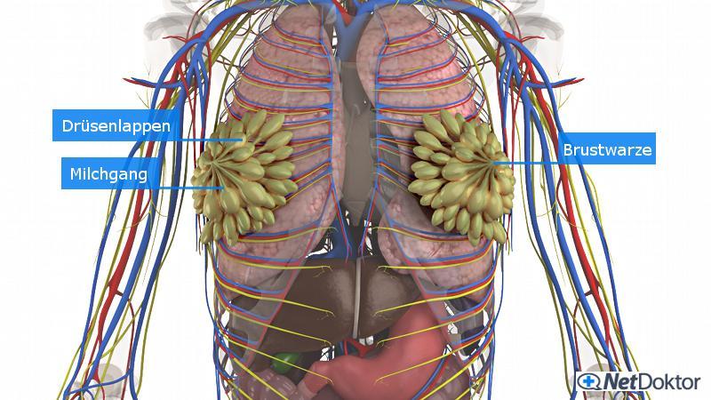 Mri und Brusttumor Diagnose